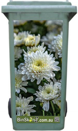 Chrysanthmum02